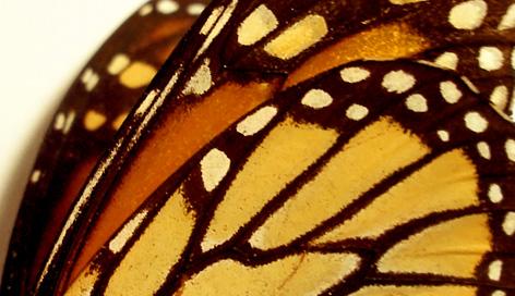 Nuevas oportunidades para el Santuario de la Monarca